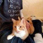 trusted cat sitter San Francisco
