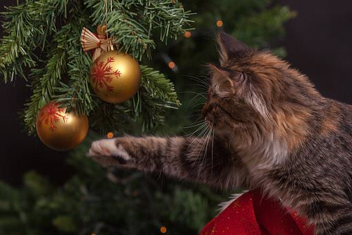 , Holiday Hazards for Your Cat: O Christmas Trees and Cats, The Comforted Kitty