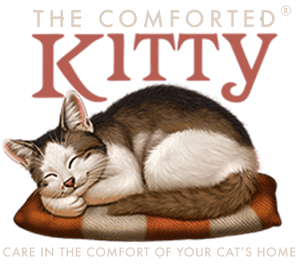 pet sitter, How Our Cat Sitting Process Works, The Comforted Kitty, The Comforted Kitty