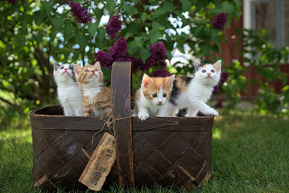 Ready To Adopt Here S Your Ultimate Guide To Cat Rescues In San Francisco The Comforted Kitty