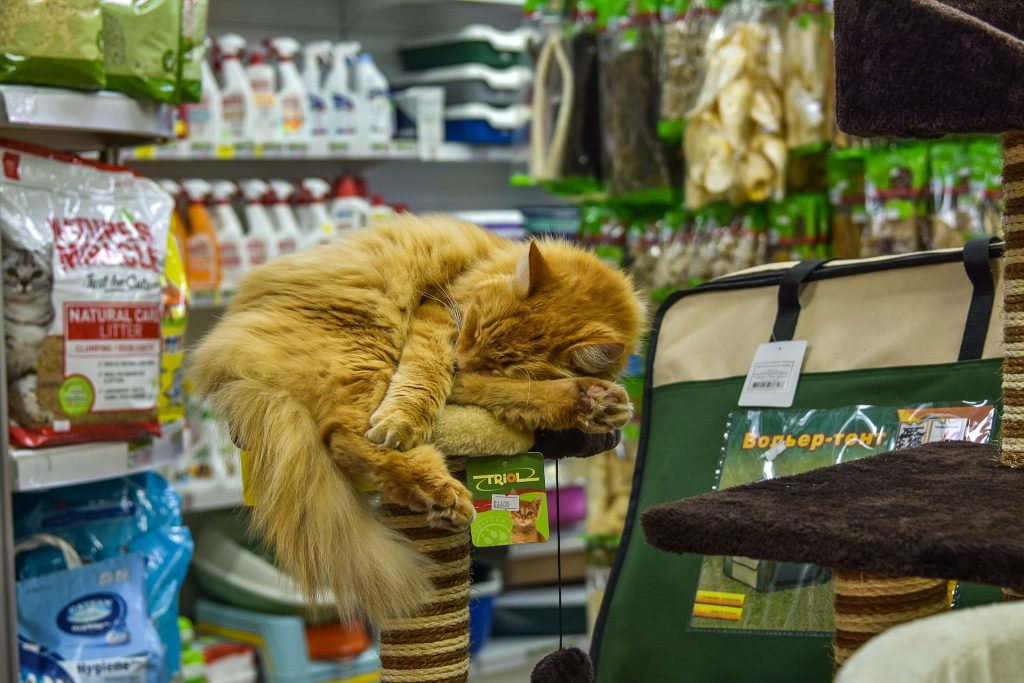 , The Best Pet Boutiques in the Bay Area You Need To Check Out, The Comforted Kitty