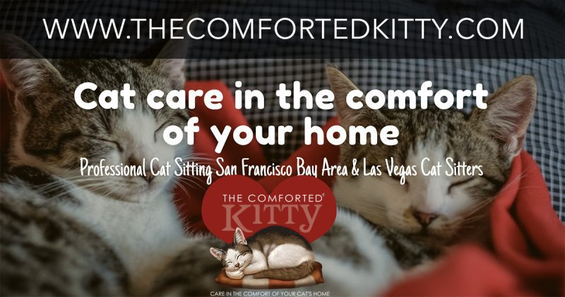 comforted kitty, Comforted kitty of the month, The Comforted Kitty