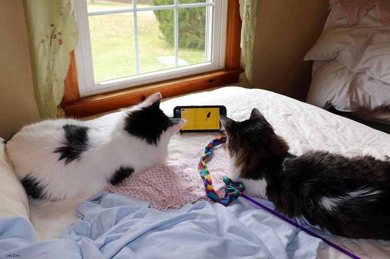 , Keep Your Cat Happy: DIY Cat Enrichment, The Comforted Kitty