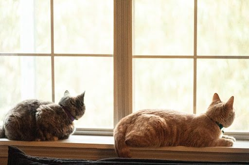 , How to Feel Safe Leaving Your Cat at Home While on Vacation, The Comforted Kitty