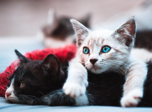 , Why Two Cats Are Better Than One, The Comforted Kitty