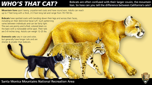 , Protecting your Purrfect Pet from Predatory Wildlife, The Comforted Kitty