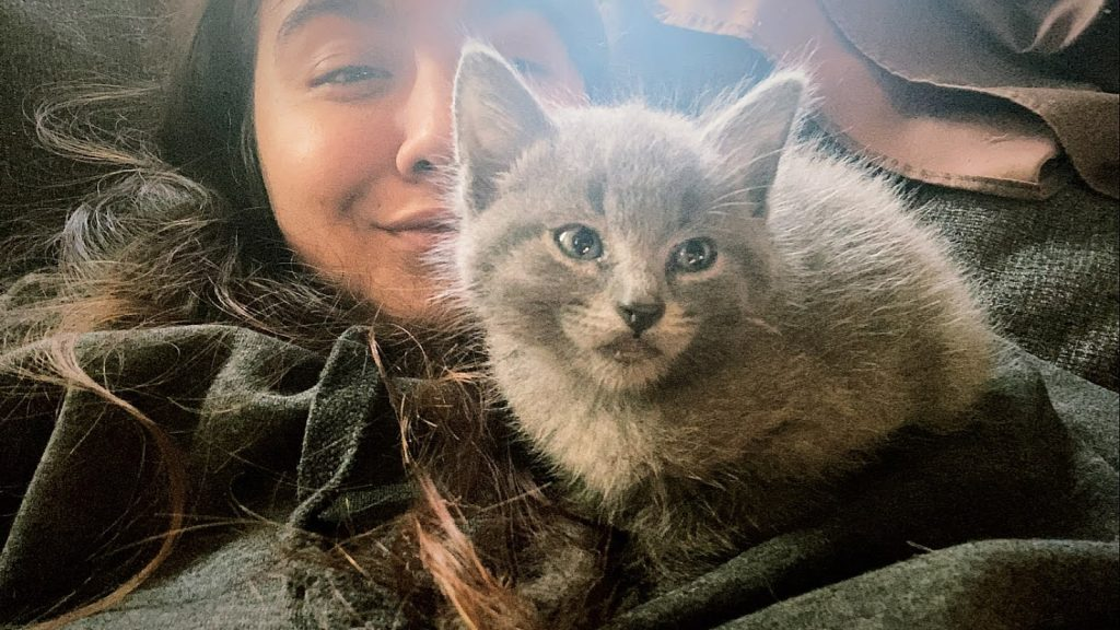 Janet is a local Los Angeles cat sitter