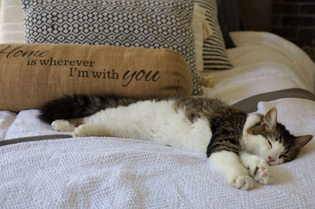 , Here, Kitty Kitty! Lost and Found Pet Resources in Sacramento, The Comforted Kitty