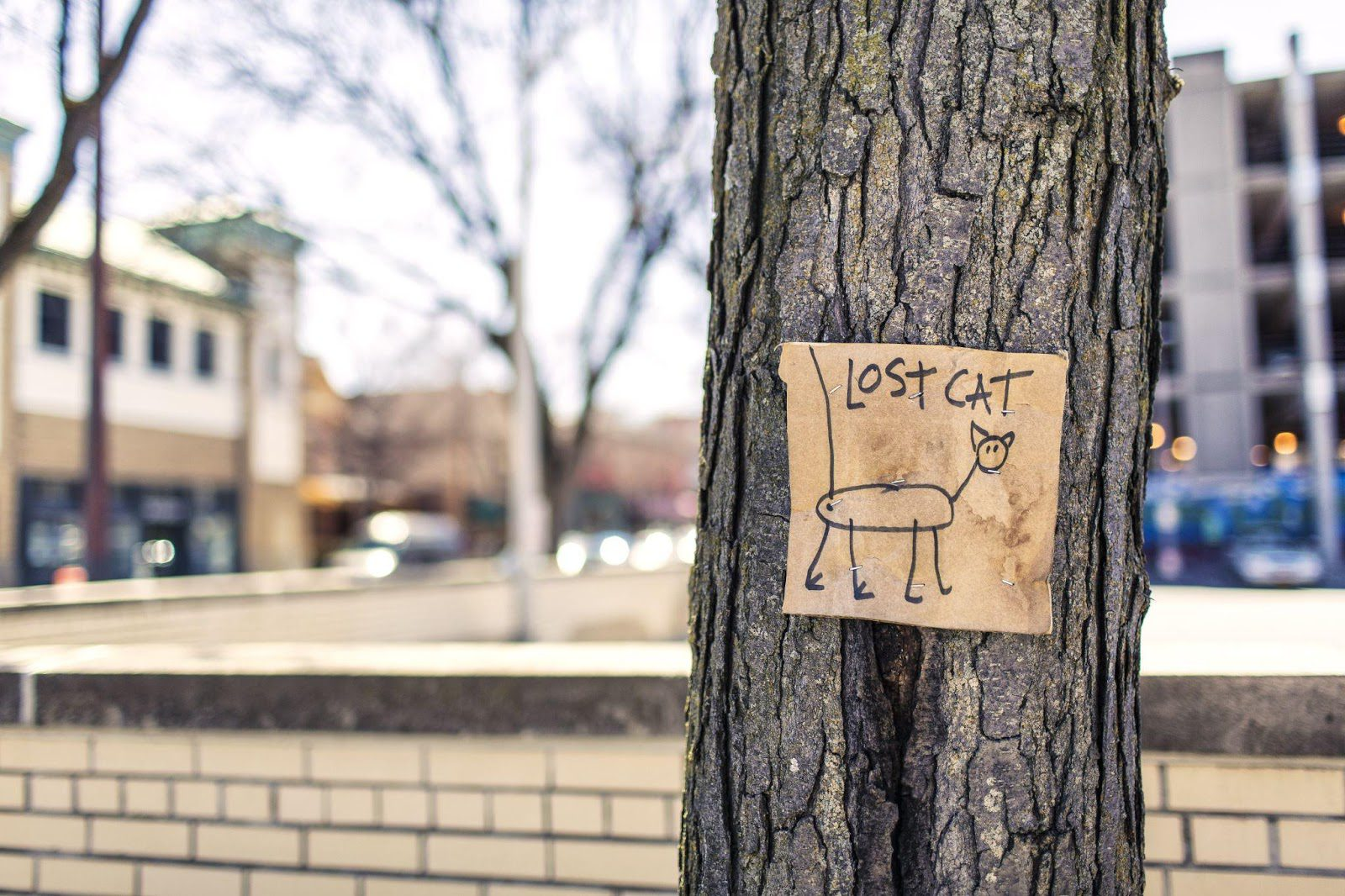 sacramento lost cat resources