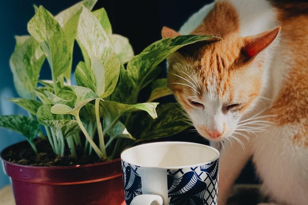 , Cat Cafés in Los Angeles, The Comforted Kitty