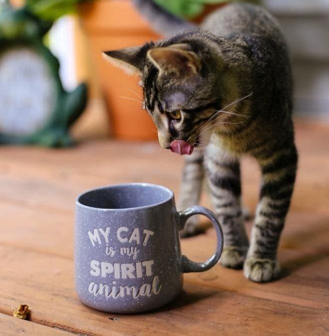 Cat Cafés in Sacramento and Surrounding Areas