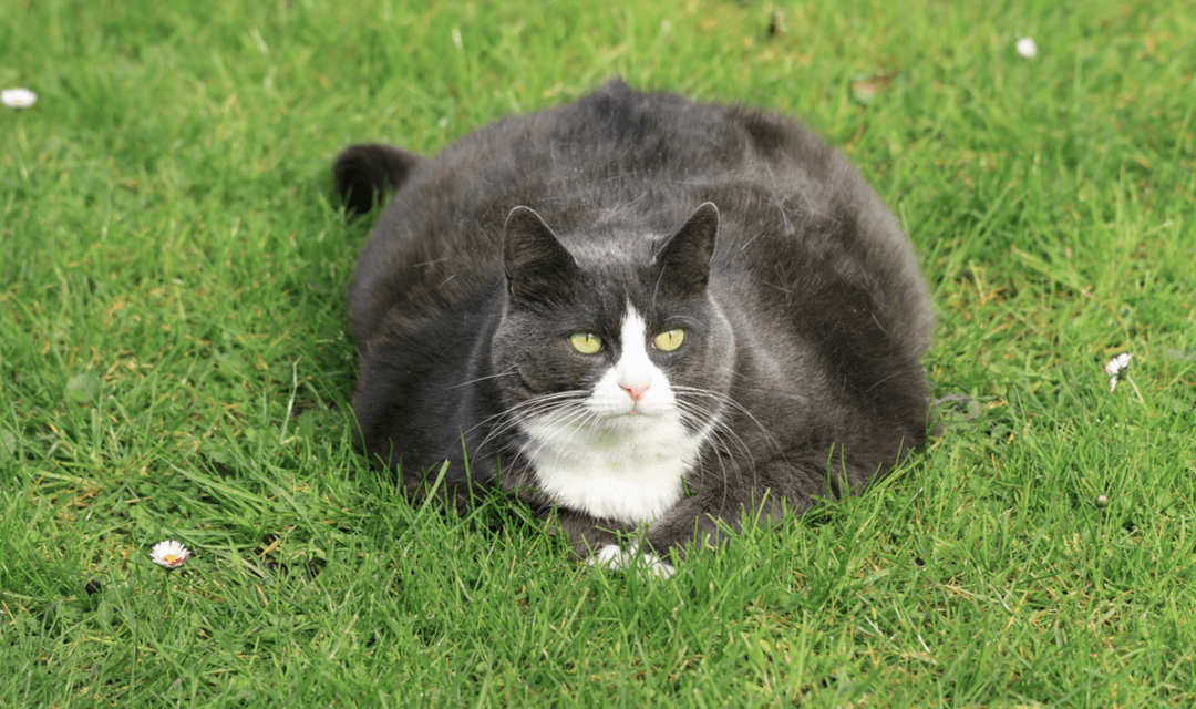 Five Common Health Problems in Cats