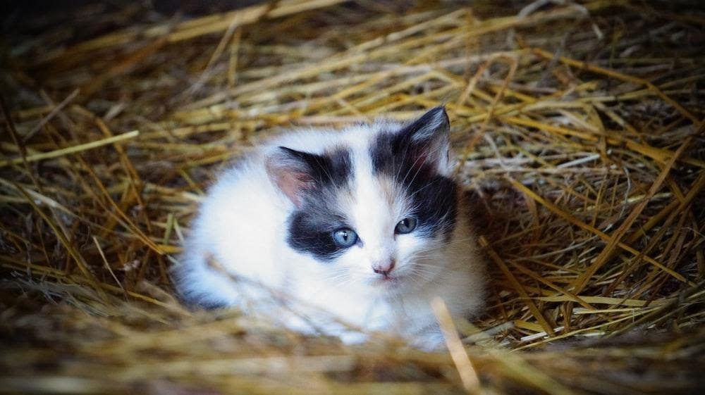, What to Do If You Find Sick or Abandoned Kittens, The Comforted Kitty