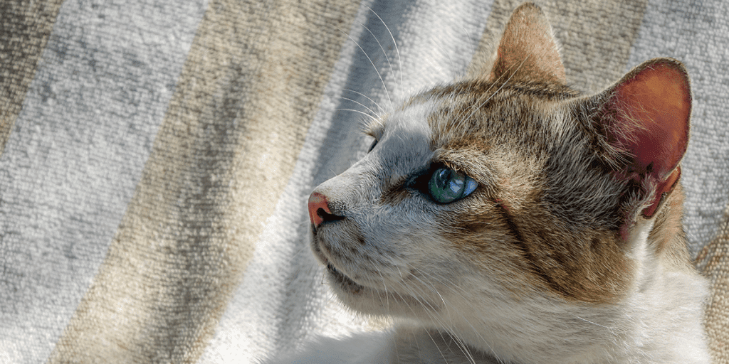, Five Common Health Problems in Cats, The Comforted Kitty