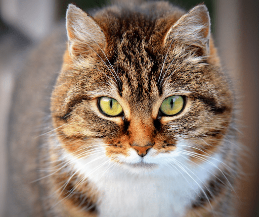 , Cat Rescues in the Los Angeles Area, The Comforted Kitty