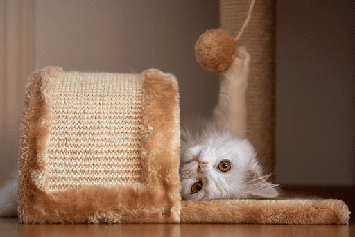 , Popular Innovative Cat Products in 2021, The Comforted Kitty