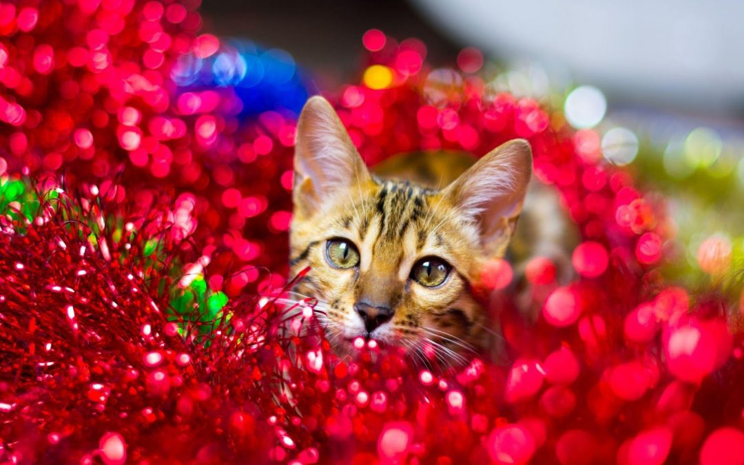 The Best Cat Events and Entertainment in Las Vegas