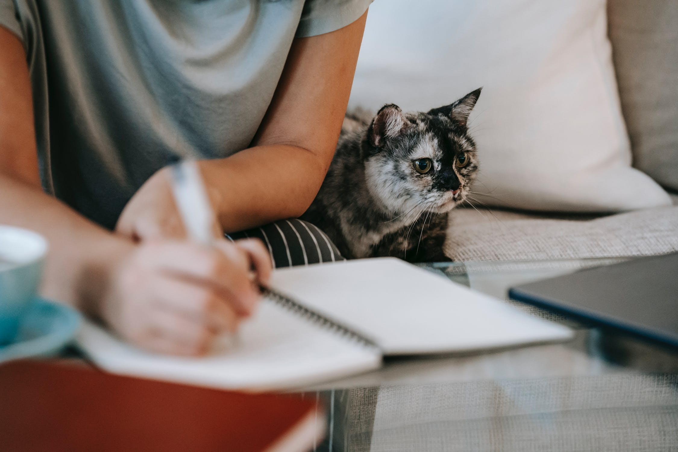 meet and greet your cat sitter, What Happens During the Meet & Greet with Your Cat Sitter?, The Comforted Kitty