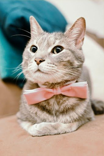 , LA's Best Events and Entertainment for Cat Lovers, The Comforted Kitty