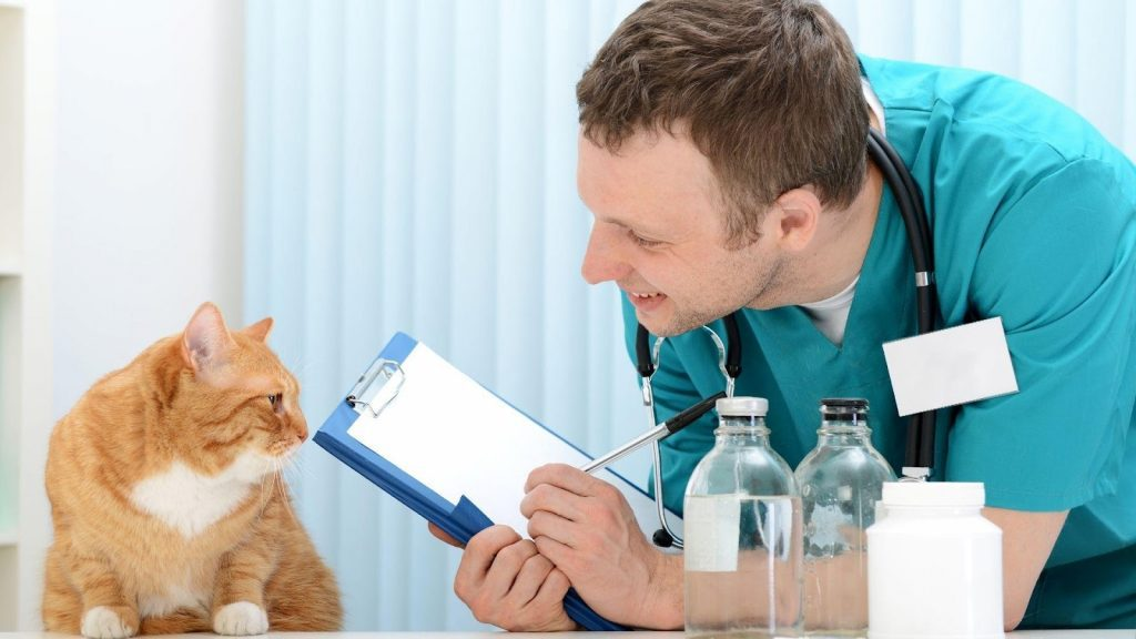 , Your Ultimate Guide to Veterinarians in Sacramento, The Comforted Kitty