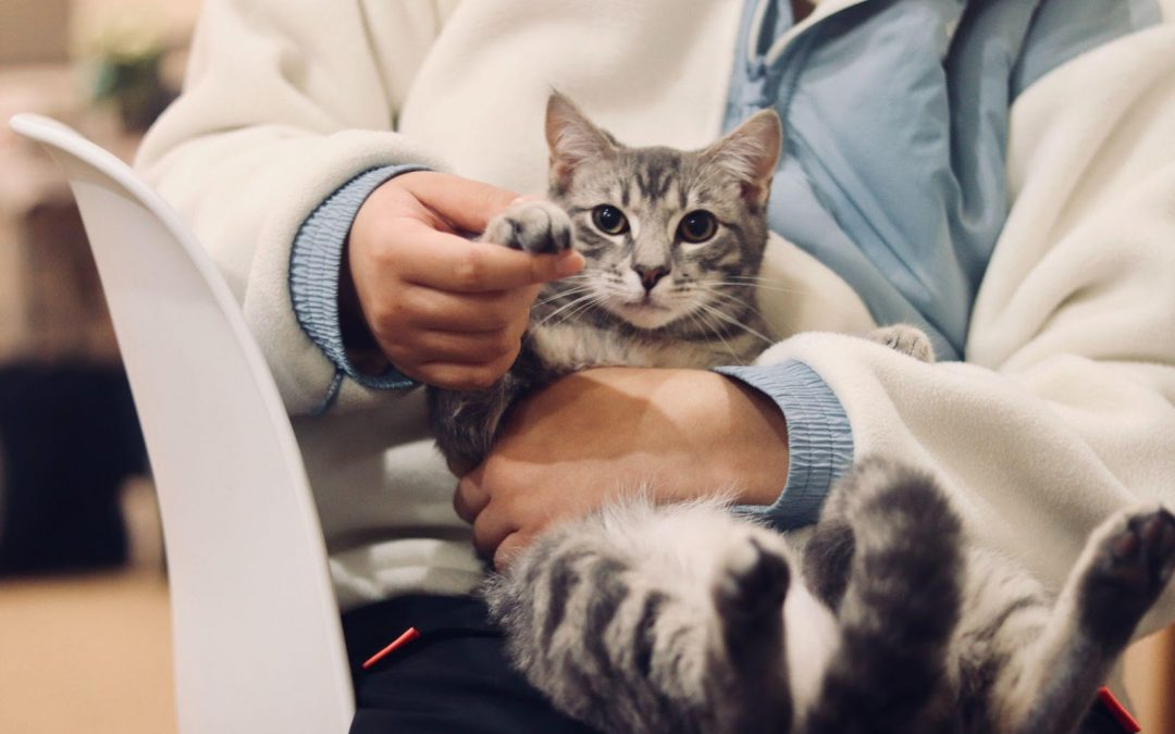 Your Ultimate Guide to Cat Veterinarians in Greater Los Angeles