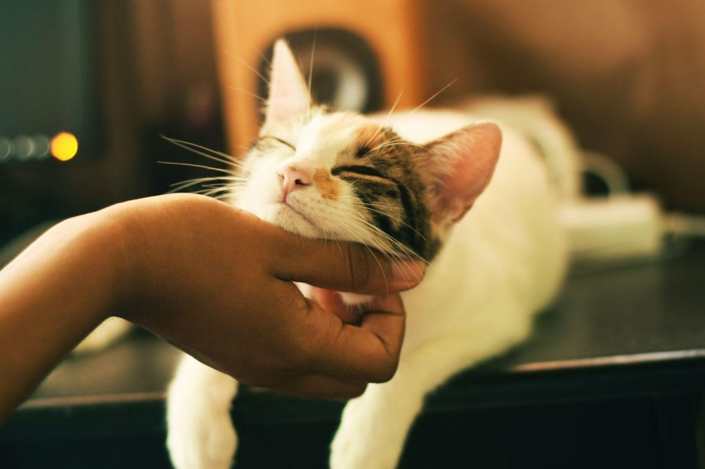 , Your Ultimate Guide to Cat Veterinarians in Greater Los Angeles, The Comforted Kitty