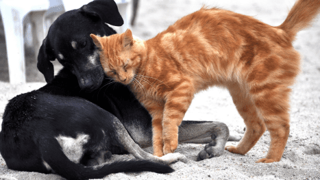 , Your Ultimate Guide to Veterinarians in Las Vegas, The Comforted Kitty