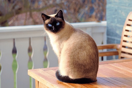 How to Introduce a New Cat Into Your Home