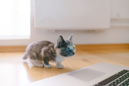 Best Cat Veterinarians of Silicon Valley