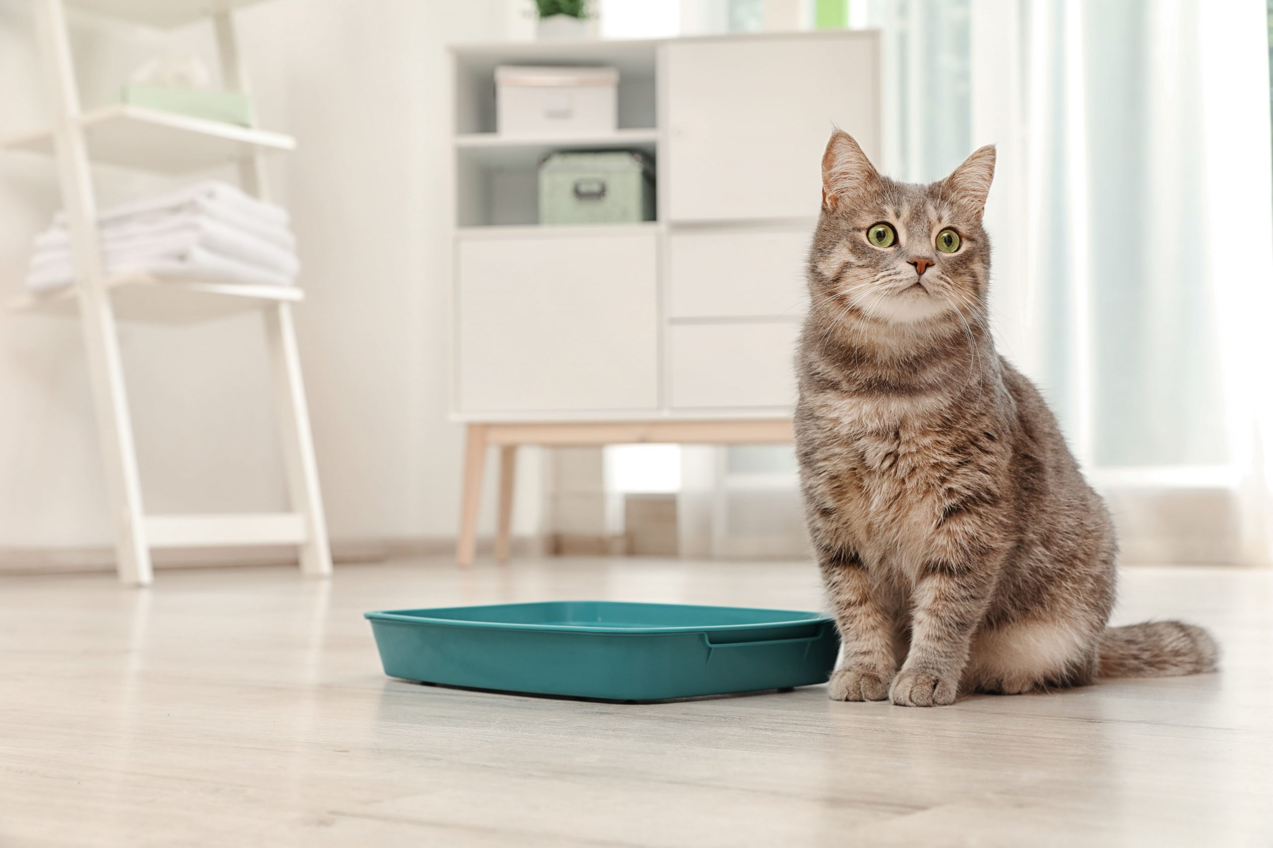 , Professional Cat Sitting in San Francisco, The Comforted Kitty