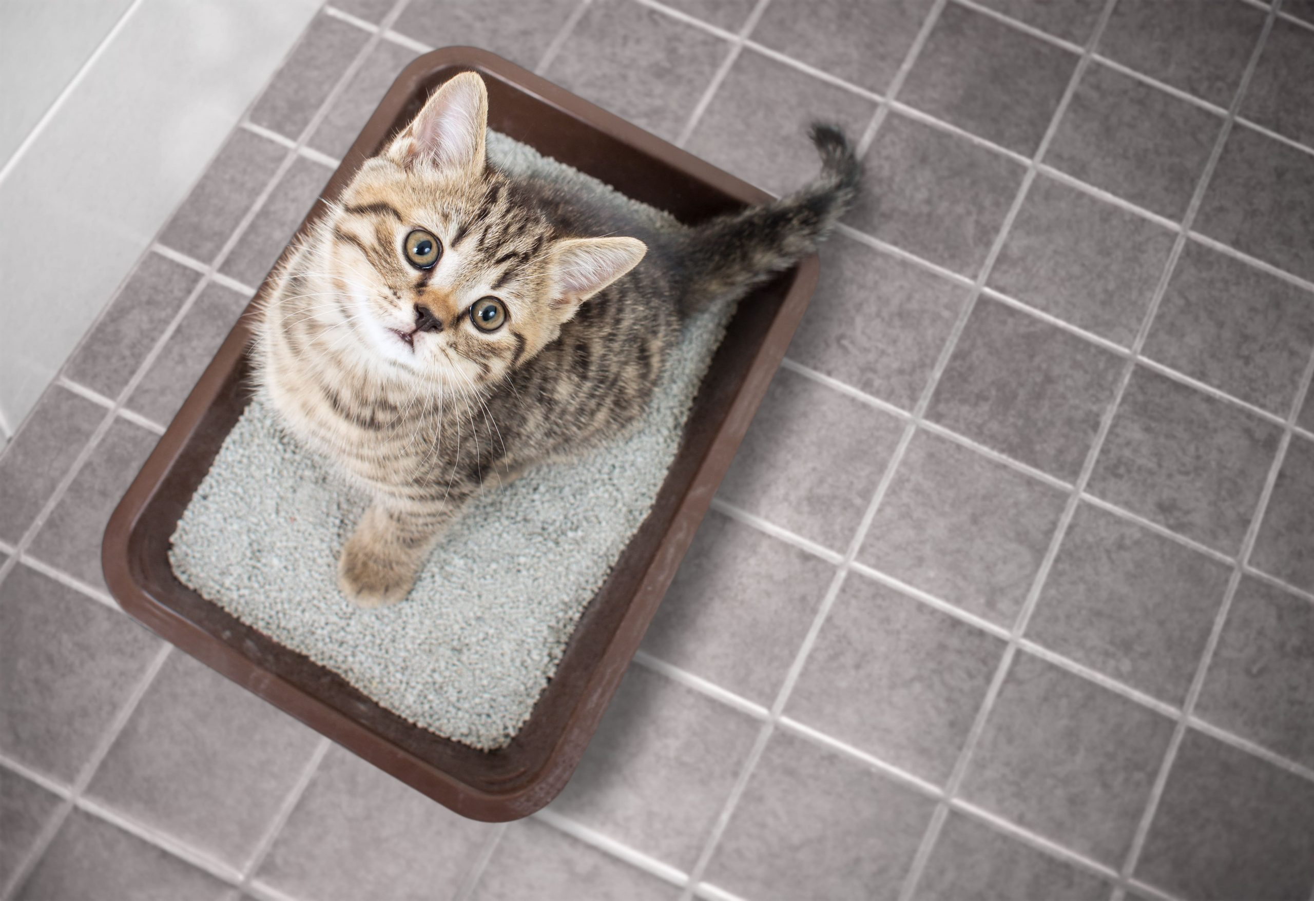 , Vallejo's Best Cat Sitting Service, The Comforted Kitty