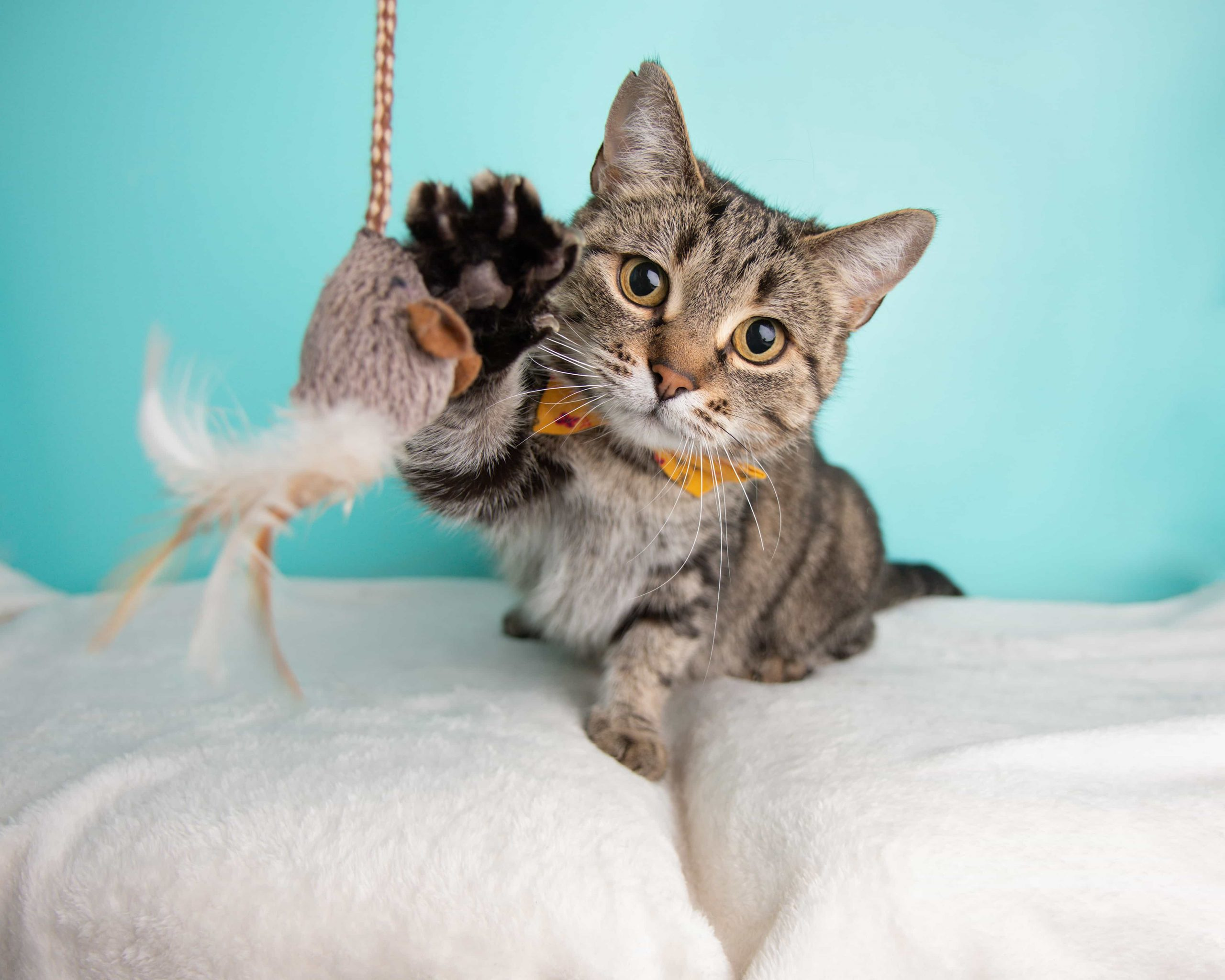 , In-Home Cat Sitting in Las Vegas, The Comforted Kitty
