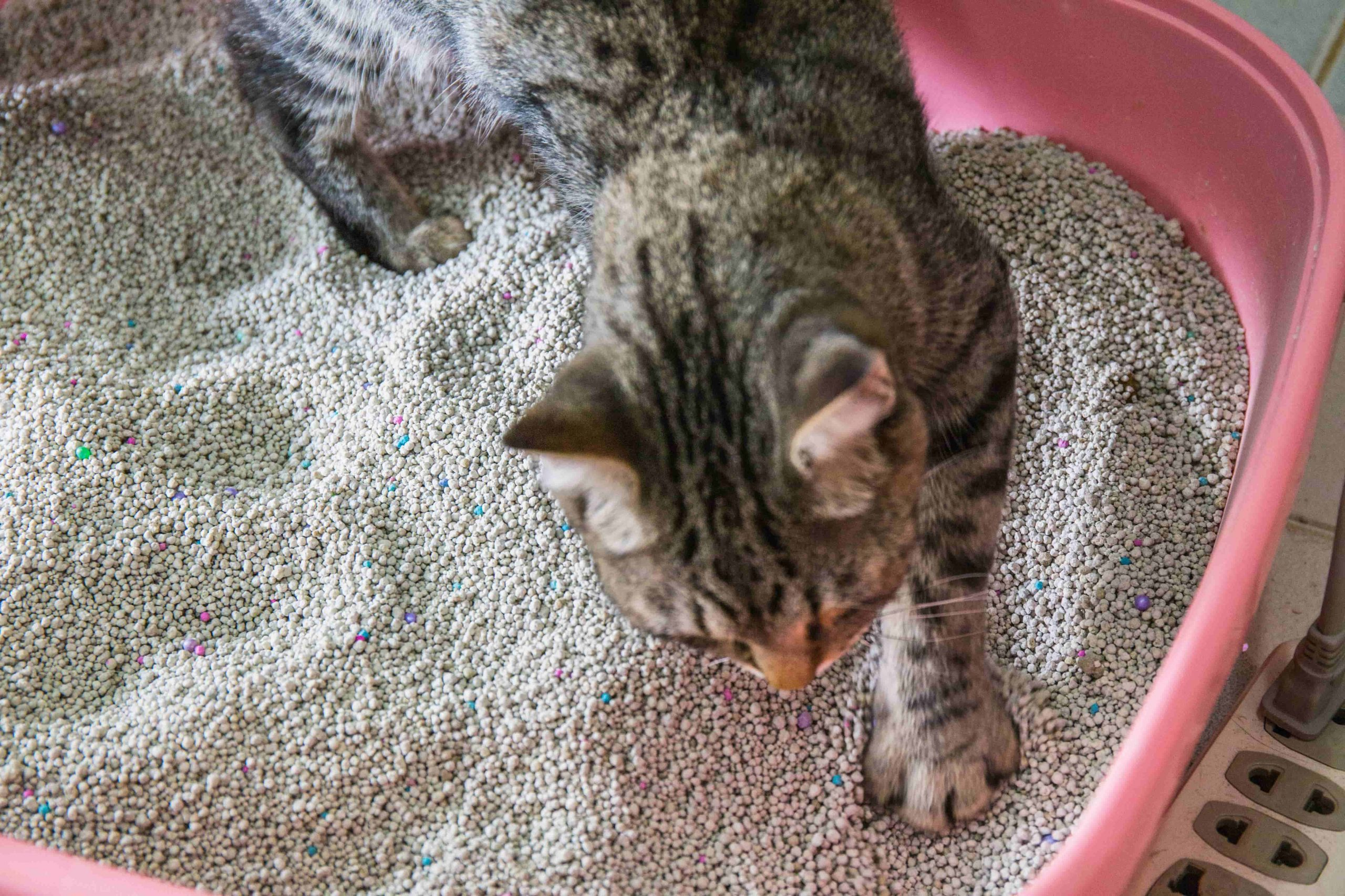 , Los Angeles Cat Sitting, The Comforted Kitty