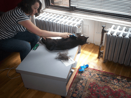 , Managing Hairballs with Cats, The Comforted Kitty