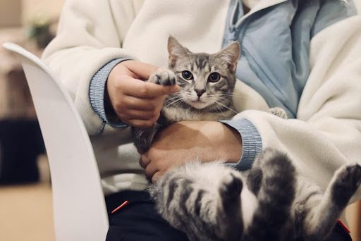 All About Vaccines for Cats